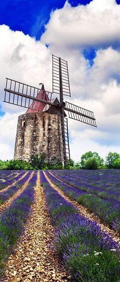 Lavender field in Provence, France #LavenderFields