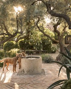 Outdoor Rooms, Outdoor Gardens, Outdoor Living, Small Courtyard Gardens, Courtyard Ideas, Beautiful Landscapes, Beautiful Gardens, Dream Garden, Home And Garden