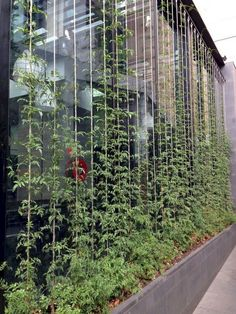 38+ Incredible Vertical Garden for Green and Cool House #verticalgarden #green #house