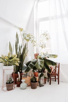 Corner Plant collect