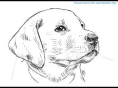 25 Best puppy drawing images in 2019 | Puppy drawing, Dog