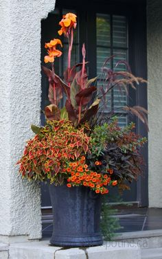 Cannas work well in containers- don't spread that way!- & this one with the burgundy striped leaves really makes a great fall statement. I like the zinc looking container too. Great planting combo with the grass, coleus, & highlights of orange.