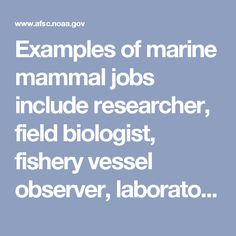 Examples of marine mammal jobs include researcher, field biologist, fishery vessel observer, laboratory technician, animal trainer, animal care specialist, veterinarian, whale watch guide, naturalist, educator at any level and government or private agency positions in legislative, management, conservation, and animal welfare issues. Many marine mammal scientists work with museum displays and collections, as a curator, an artist, an illustrator, a photographer, or a film maker.