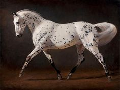 Painting of a Leopard Appaloosa
