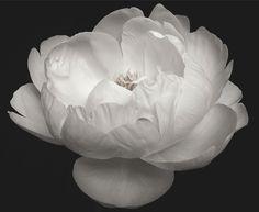 花の官能性を映し出すマーク・ヴァサーロの展示会「FLOWERS」 | GQ JAPAN