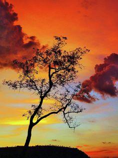 Silhouette Tree - © Jose Carlos Patricio - http://fineartamerica.com/featured/silhouette-tree-jc-patricio.html