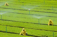 a irrigação dos solos - Pesquisa Google