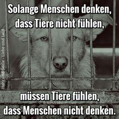Solange Menschen denken, dass Tiere nicht fühlen...