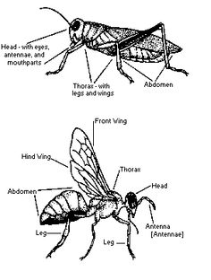 Ants Life Cycle Science Activities and Worksheets: In this