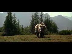 Хороший семейный фильм про животных. Смотрите мои другие доски про животных.