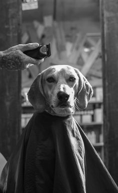 Maddie getting a haircut.