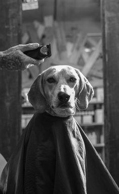 Maddie getting a haircut.