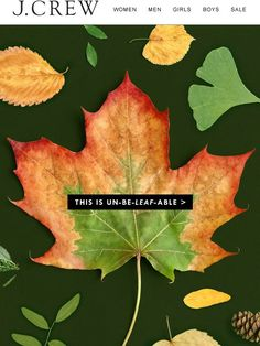 Crew: This will leaf you speechless Email Marketing Design, Email Marketing Campaign, Marketing And Advertising, Marketing Ideas, Mailer Design, Ad Design, Design Ideas, Graphic Design, Pumpkin Facial