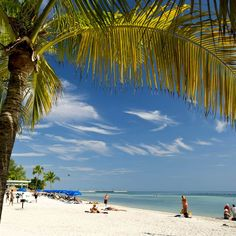 Florida Keys beach framed with palm trees