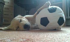 Miminko :* 2 měsíční štěně  Name: Bolt