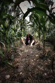 creepy things reside in cornfields