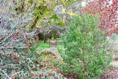 A forested path awaits you in Northstar Park in Davis California