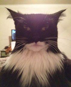 The Cat Crusader