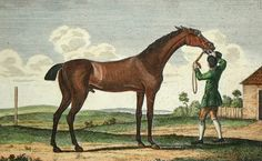 Herod (sometimes called King Herod) appears multiple times in the damline of Dunaden. This great race horse and sire carried the Byerley Turk sire line on into the future. When bred to the Skim Mare the result was a mare named Expectation, Dunaden's 21'st generation mare. herod was by Tartar and out of the great broodmare Cypron by Blaze.