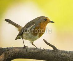 Robin en licht