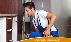 الحل السريع للقضاء علي الحشرات من خلال فريق ابادة حشرات مختص يعمل لدي افضل شركة لابادة الحشرات و هي الشركة الفرنسية المتخصصة . للتوصال معنا عبر :- http://www.anti-insects.com