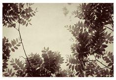 Plum - Fine Art Photograph