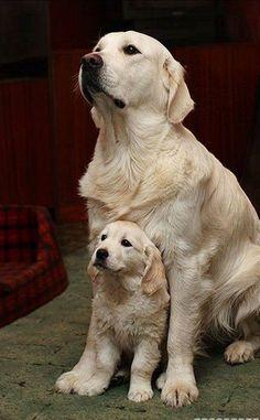Ive got you covered #rescuedog #dog #itsarescuedoglife