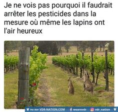 Image Gag, French Meme, Funny Art, Funny Moments, Troll, Memes, Good Times, Funny Pictures, Animals