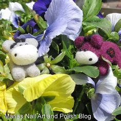 Playing in the pansies...