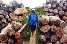 Auf Madagaskar kämpfen die Einwohner um die Reste ihres außergewöhnlichen Naturerbes. Der Touristenführer Armand Marozafy saß fünf Monate im Gefängnis, weil er Holzhändler verraten hat. Jetzt wurde sein Freund Clovis Razafimalala zu Unrecht eingesperrt. Lasst uns Clovis befreien!