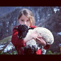 Kurdish girl and sheep....awwwwwwww
