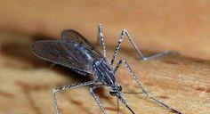 Mosquito Killer Device 003 (MosKatchi) #zikavirus #malaria #WHO #Brazil #Africa #RIO2016