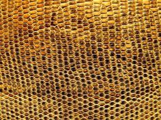 Snake Leather Texture Free Photo