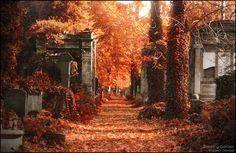 Falling-through-autumn