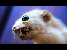 13 MEANEST Mammals on Earth - YouTube