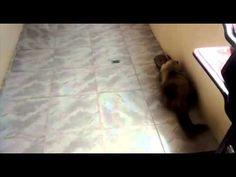 Gatos engraçados (funny cats) - Brincando com carretel de linha