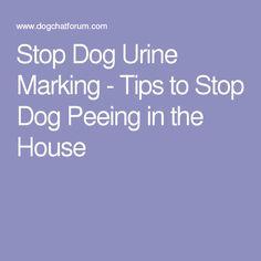 Stop Dog Urine Marking