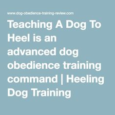 Teaching A Dog To Heel is an advanced dog obedience training command | Heeling Dog Training