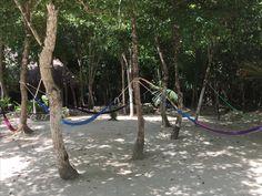 Mangrove forests are the green lungs of Mexico https://aktun-chen.com/blog/donde-se-juntan-el-agua-y-se-crea-la-vida.html