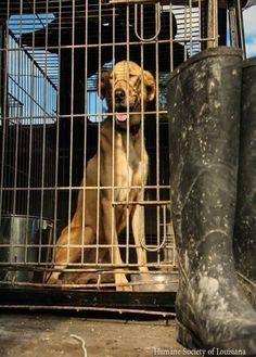 Ya no está quedando espacio en Louisiana para albergar a los animales rescatados en las inundaciones