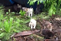 Rescuer Sings the Song of Meows, 10+ Feral Kittens Come Running