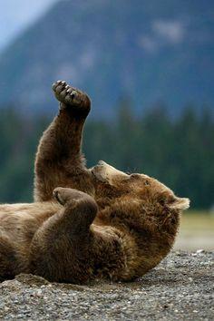 Boxing Bear - By: (Olav Thokle)