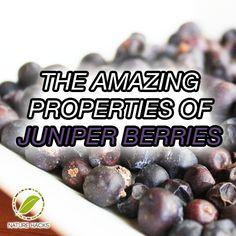 juniper berries health benefits   Juniper Berries
