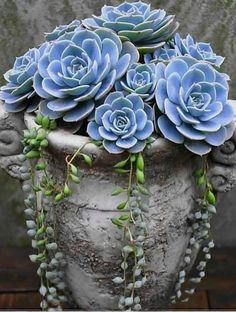 Charming Succulent Indoor Garden Ideas 2019 – Page 60 of 64 succulent garden indoor; Succulent Landscaping, Succulent Gardening, Succulent Pots, Planting Succulents, Container Gardening, Garden Plants, House Plants, Planting Flowers, Watering Succulents