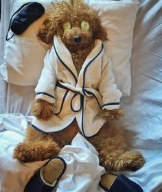 Discover Red Miniature Poodle Poodle Blanco Source by elwoodpreece The post Poodle Blanco appeared first on Dolan Dogs. Poodles, Goldendoodle Funny, Goldendoodles, Small Poodle, Relax, Puppy Party, Dog Quotes, Funny Animal Pictures, Animal Photography