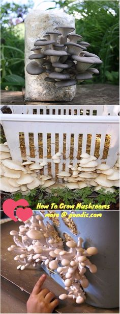 How To Grow Mushrooms At Home - Pondic