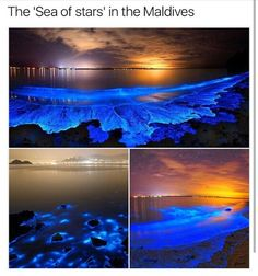 """""""It turns out that putting a certain type of plankton under stress results in one of the most stress-relieving sights on the planet, their resultant blue glow creating astral patterns on sea shores Vacation Places, Dream Vacations, Vacation Spots, Romantic Vacations, Italy Vacation, Honeymoon Destinations, Romantic Travel, Italy Travel, The Places Youll Go"""