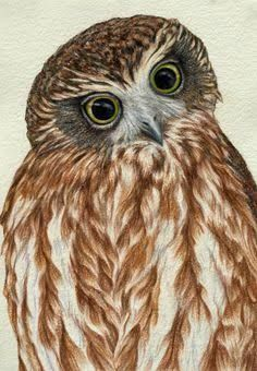 A gallery of all the Birdland Series pastel drawings by artist Rachel Newling, portraits of Australian birds. Animal Drawings, Art Drawings, Pencil Drawings, Tank Drawing, Bird Artists, Art Van, Scratchboard, Australian Animals, Owl Art