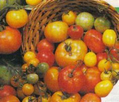 You can grow organic tomatoes. Not only that, but you're not limited to the supermarket offering (small or medium). Tomatoes come in numerous different shapes, sizes and co Organic Mulch, Grow Organic, Organic Farming, Organic Gardening, Growing Tomatoes, Growing Herbs, Dried Tomatoes, Corn Plant, Crop Rotation