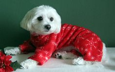 SNOWFLAKES!!! Beautiful for the holidays. Comes in 2 Leg or 4 Leg styles. (Dog Clothes, Pet Clothes, Dog pajamas, Dog Pyjamas, Christmas Clothes, Fleece Dog Clothes for Dogs or Cats)